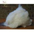 Fibre brute de laine de mouton de fibre de cachemire pure à vendre