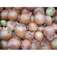 Frische gelbe Zwiebel verpackt mit Mesh Bag