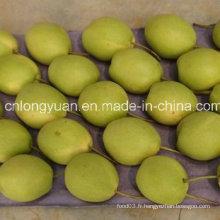 Vente à chaud de nouvelles récoltes, poire fraiche et douce Shandong