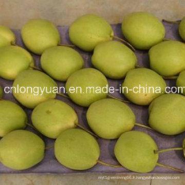 Vente chaude nouvelle culture fraîche et douce Shandong poire