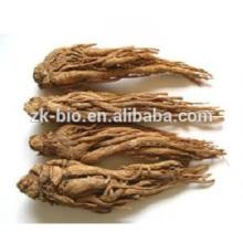 Polvo de extracto de angélica de medicina tradicional china