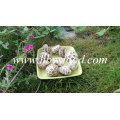Dried Flower Mushroom, Shiitake Mushroom, Dried Vegetable