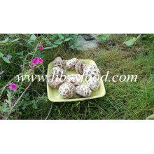 Seta de flores secas, seta de shiitake, vegetales secos