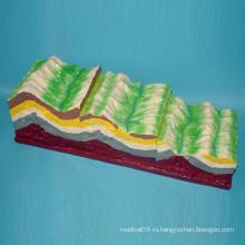 Пластиковая модель вулкана для преподавания географа (R210101)