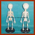 Anatomie Modèle de squelette infantile