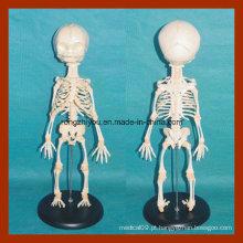 Anatomia modelo de esqueleto infantil