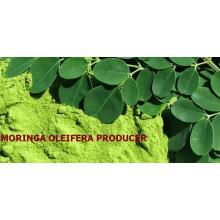 Moringa leaf from india