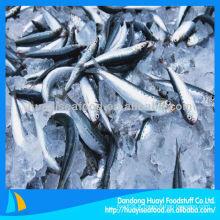 Sardine familiale fraiche et congelée