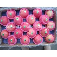 95% Rouge FUJI Pomme (80/88/100)