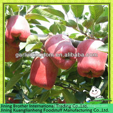 2013 new season red delicious apple