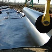 ASTM GB Standard Waterproof Smooth or Textured Membrane