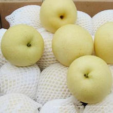 Fresh New Season Golden Pear