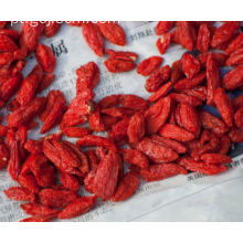 Regular baga de goji chinês imune