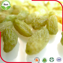 2016 New Crop Seedless Green Raisin