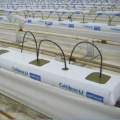 Greenhouse  Hydroponics Rock Wool  Planting system