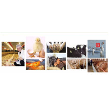 Animal Feed CAS 590-46-5 poultry feed additives products