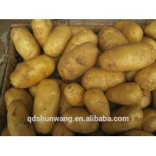 2014 свежий картофель
