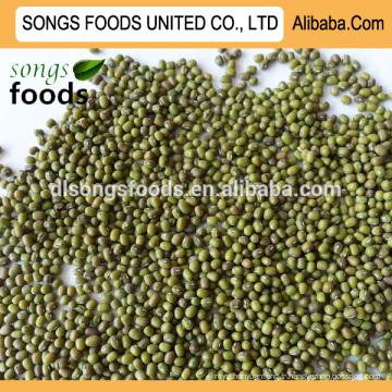 Spécifications de haute qualité vente haricots mungo verts