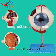 ISO Advanced Eyeball Model, Anatomical Eye model
