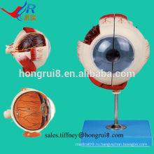 Модель усовершенствованного глазного яблока ISO, модель анатомического глаза