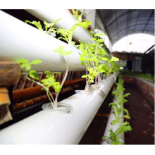 Greenhouse NFT Hydroponics system for lettuce salad-Skyplant