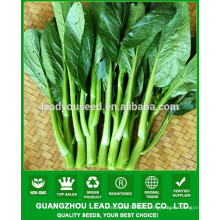 NCS06 Meifei OP choy sum seeds prices for planting