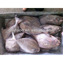 IQF frozen black pomfret fish