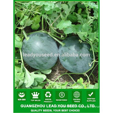 NW10 Heis Hybrid sweet seeds watermelon