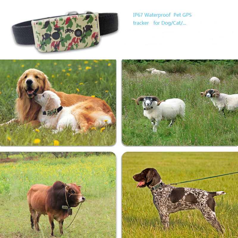 GPS monitor for your dog