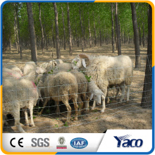 Field Fence gegen Eber und wilde Hirsche in China (ISO9001 Fabrik)