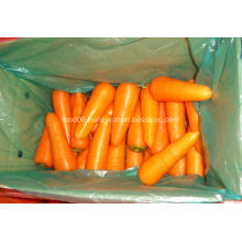 Fresh carrot vegetables for sale