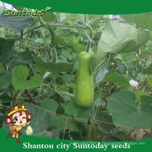 Suntoday international légumes noms où cultiver la culture de calebasses de semences agricoles vendeuses de moissonneuse (16002)