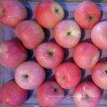 Nova safra da Qinguan Apple está chegando em breve