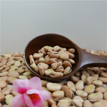 Dried Canned Broad Beans With Best Price