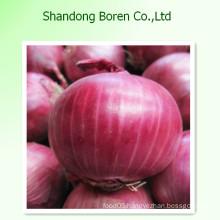 Delicious Fresh Onion in China Shandong Boren