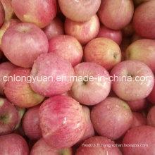 Fournisseur chinois pour la qualité de la pomme fraîche de Qinguan