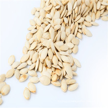 Chinese shine skin sunflower seeds 2017 new crop
