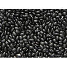 Exporter une Bonne qualité Haricots noirs chinois frais