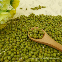 Organic non-GMO green mung beans for sprouting