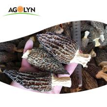 Factory Good Price Raw Orgainc Morel Mushroom Mycelium