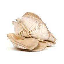 Cogumelo-ostra seco a / B / C / D