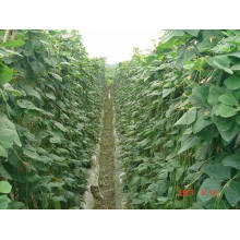 Amino Acid Organic Fertilizer Liquid