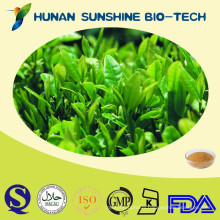 Manufacturer stable huge supply green tea extract / green tea extract powder
