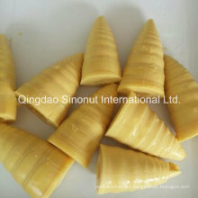 3000g Embalagem Canned Bamboo Shoots (HACCP ISO BRC)