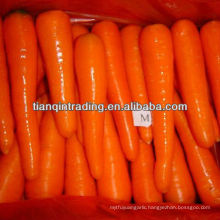 china fresh carrot low price