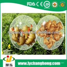 2014 neue Ernte Linyi Herkunft Ingwerwurzel für den Export