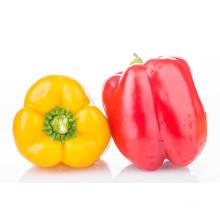 Hochwertige gelbe Paprika bunte Pfeffer auf Verkauf rote Paprika