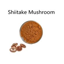 Buy online active ingredients Shiitake Mushroom powder