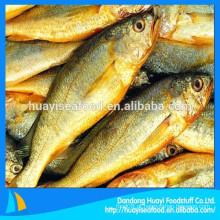 Tipos de oferta de alta qualidade congelados croaker amarelo