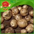 200-300г Картофель с высоким качеством картофеля
